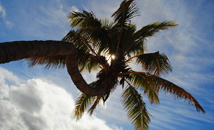 Sole palm tree with blue sky at Anakena