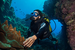 Close up of scuba diver holding corals with fish school.jpg
